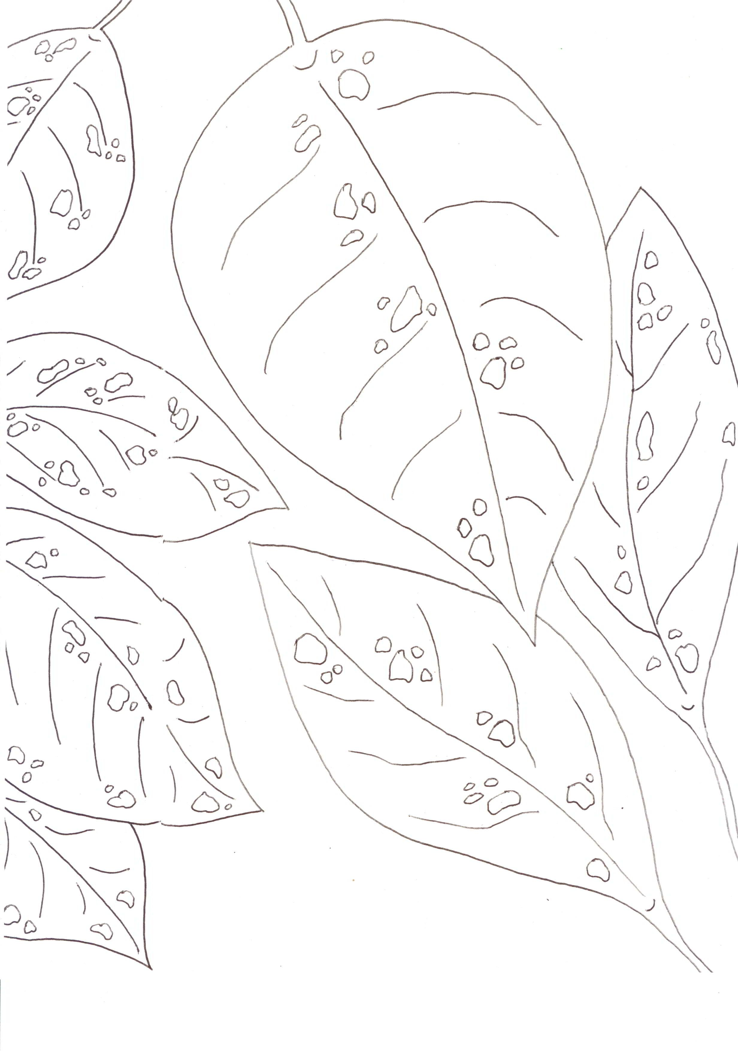 Leaves, ready to color, cover the back of a secret poem page.