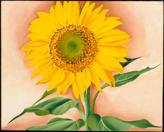 Georgia O'Keefe, A Sunflower from Maggie, 1937, oil on canvas, 16 x 20 in., Museum of Fine Arts, Boston, Alfred Stieglitz Collection-Bequest of Georgia O'Keefe, © 2007 Museum of Fine Arts, Boston, Photograph © 2012 Museum of Fine Arts, Boston, Alfred Steiglitz Collection - Bequest of Georgia O'Keefe, C 2007, Photograph C, Museum of Fine Arts, Boston