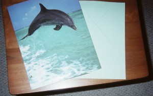 Slip a dolphin folder on a struggling student's desk to lift the child's mood and help her or him re-focus